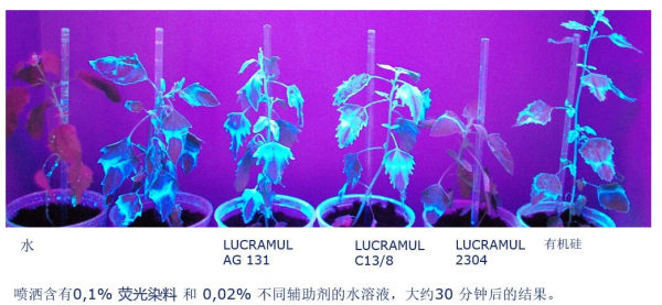 LUCRAMUL AG 131 平衡了低溢流,高润湿性和杀虫剂的高持续性。